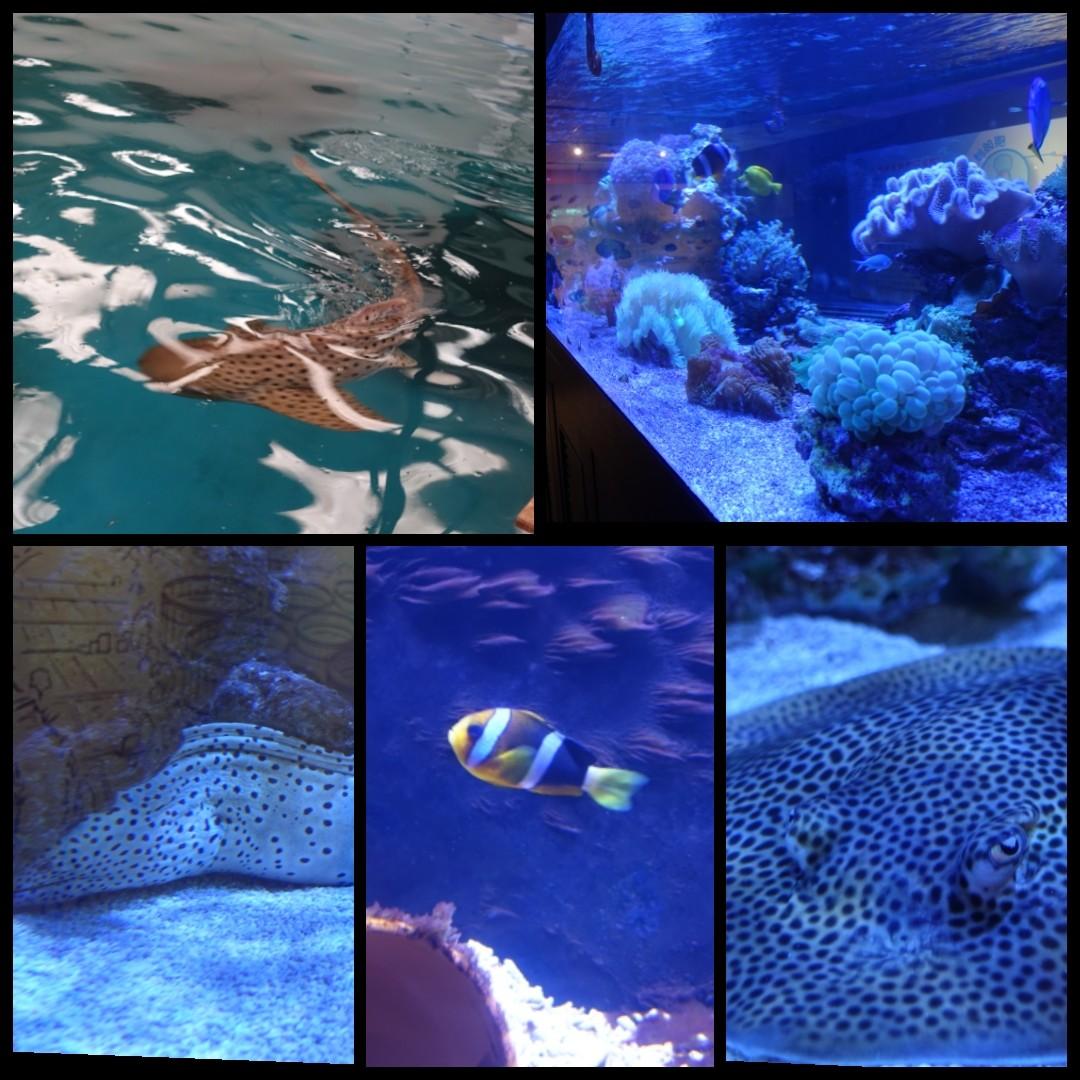 【宜蘭礁溪】金車生技水產養殖研發中心|近距離餵食鯊魚|類水族館有多種魚兒可觀賞|免費景點