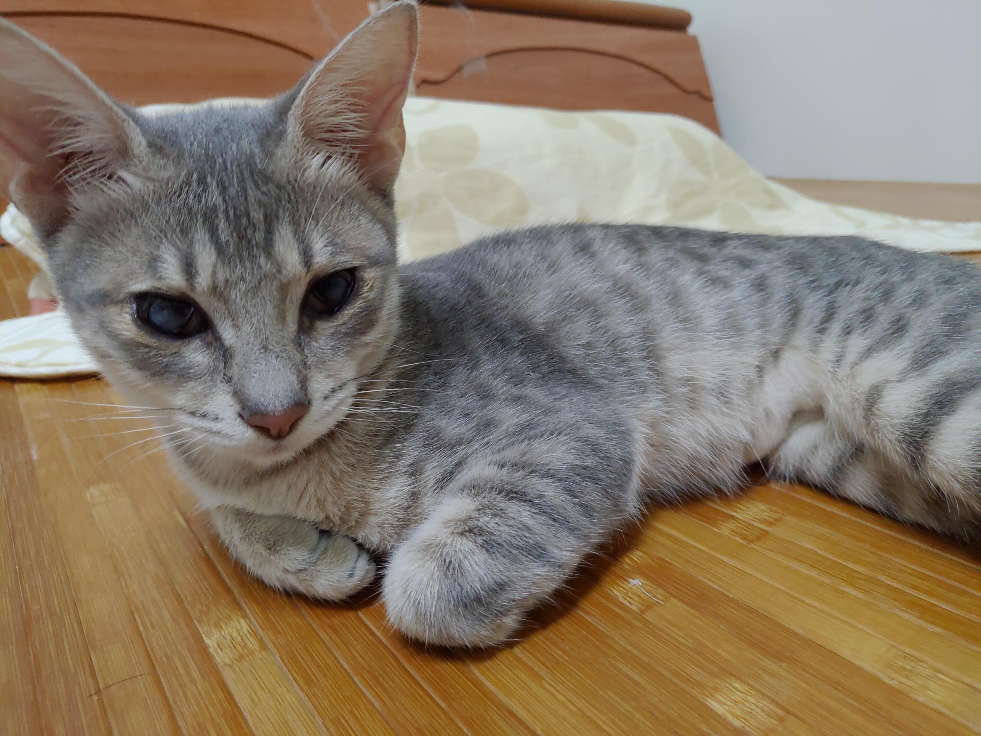 【貓咪相關】不專業新手貓奴養成日記(基礎篇)