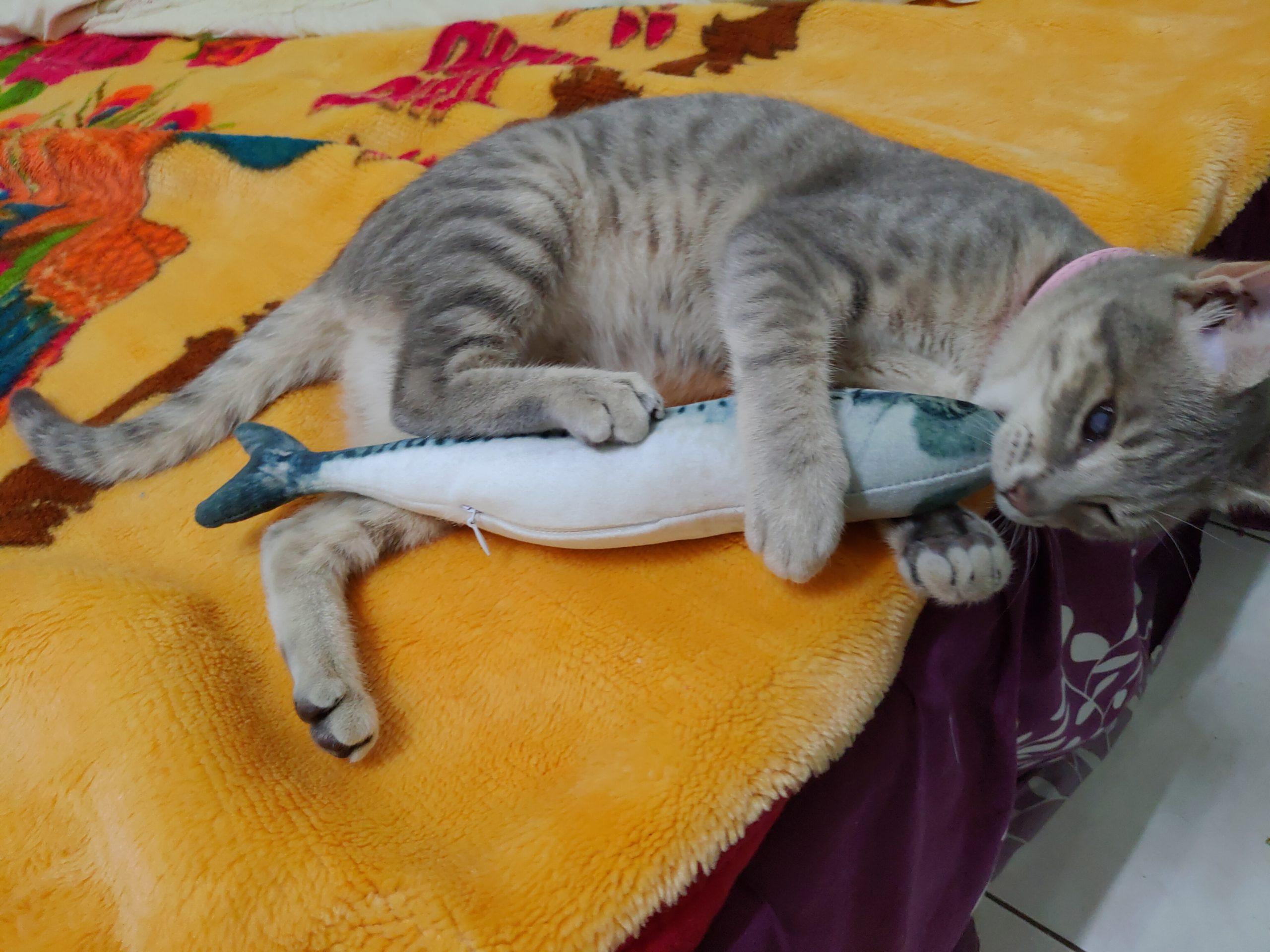【貓咪相關】貓咪超愛咬人應對策略|別因被咬就打罵